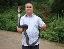 应飞雄玩眼镜蛇