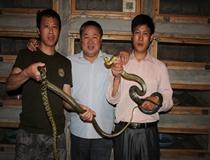 讲解养蛇技术