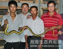养蛇还是湘南生态养蛇场的技术好