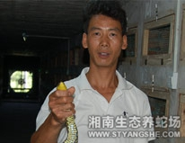 广东养殖场成功案例-王先生